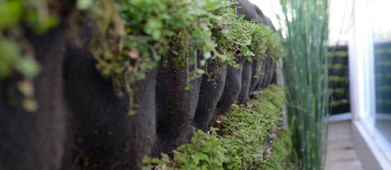 Muros verdes qu son y c mo se hacen aqu te mostramos lo - Como hacer un muro verde ...