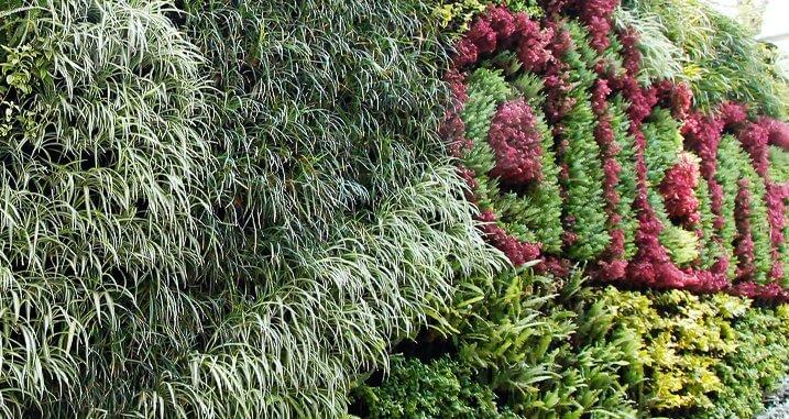 Muro Verde Bodega Alianza
