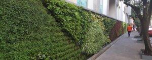 Diseño y Construcción de Muros Verdes
