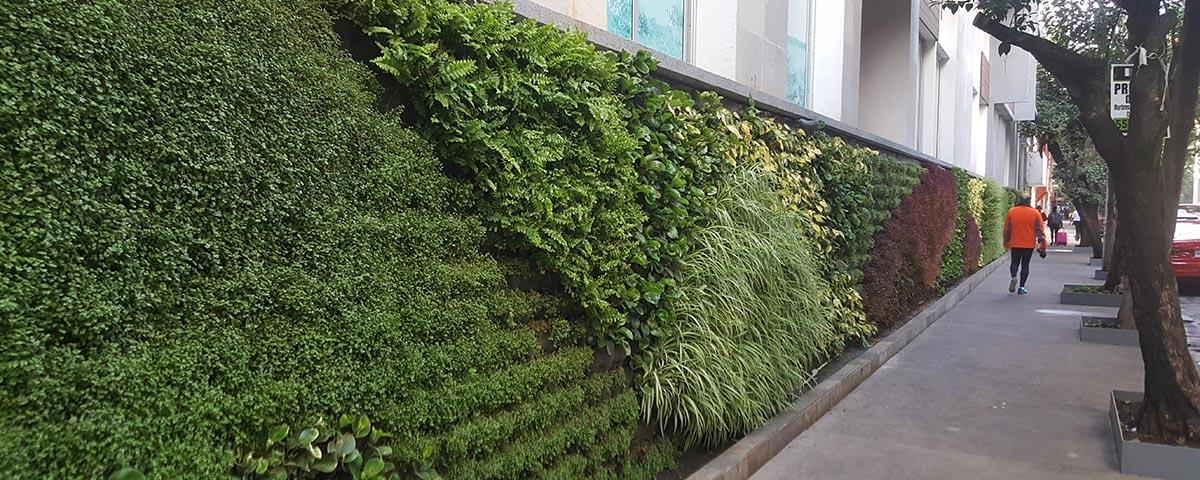 Generaci n verde muros verdes dise o y construcci n for Plantas para muros verdes verticales