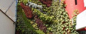 Jardines Verticales en un Inmueble