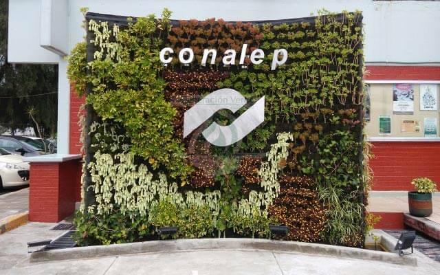 Jardín Vertical CONALEP Cuautitlán Izcalli