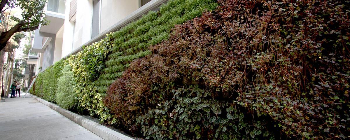 Jard n vertical n poles benito ju rez generaci n verde for Muros verdes naturales