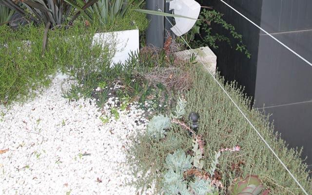 Vegetación natural de Suculentas