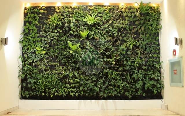 Jard n vertical interior zedec santa fe lvaro obreg n for Verde vertical jardines verticales