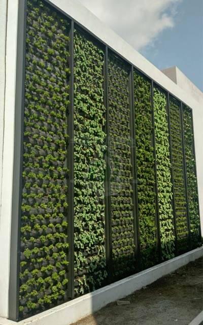Muro Verde Exterior Cuernavaca, Morelos