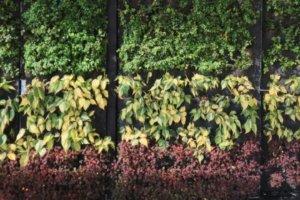Muro Verde Exterior Narvarte Poniente