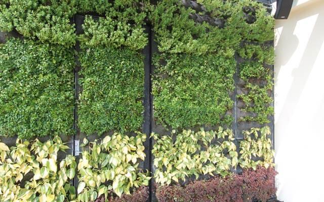 Jardín Vertical en puertas