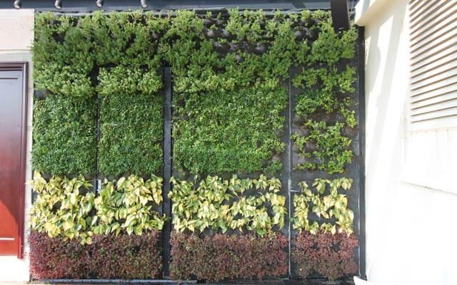 Muro Verde natural en puertas