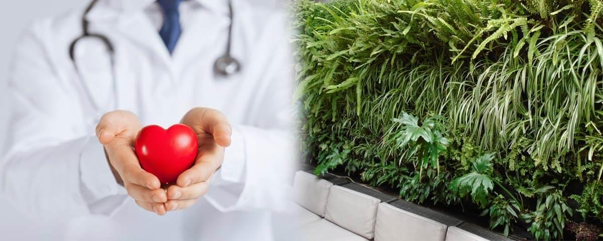 Beneficios de los Jardines Verticales para la salud