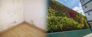 ¿por qué un muro verde es inofensivo para la humedad de las paredes?