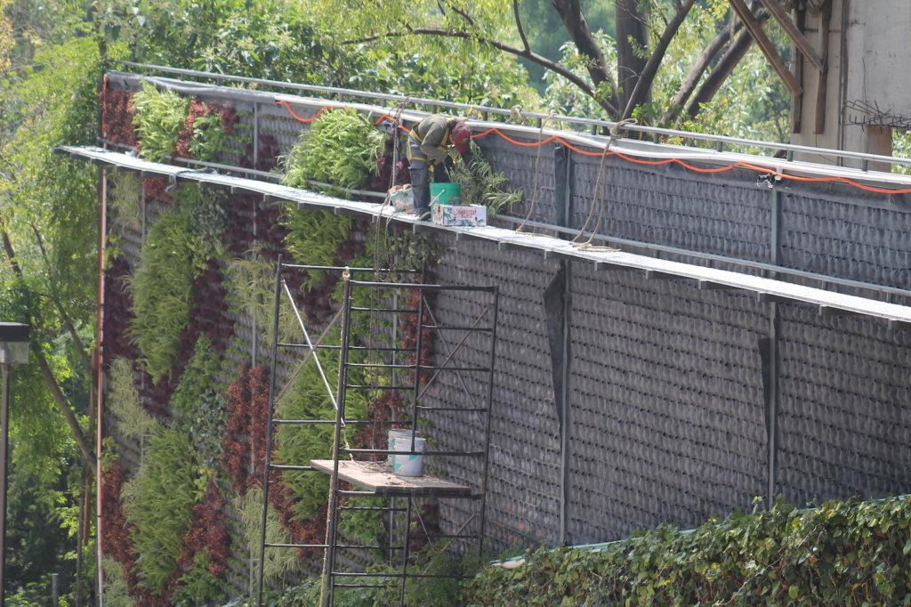 Plantación del muro verde reforma