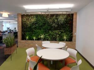 Cuidados para jardines verticales interiores