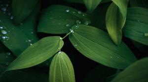 Azoteas verdes vs las Islas de Calor Urbanas