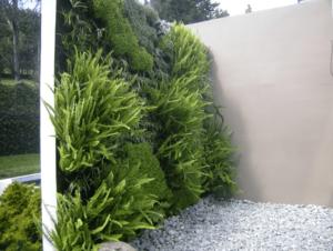 Las mejores 5 plantas para tu jardín vertical