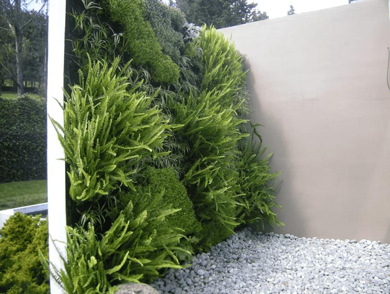 Muro con helechos