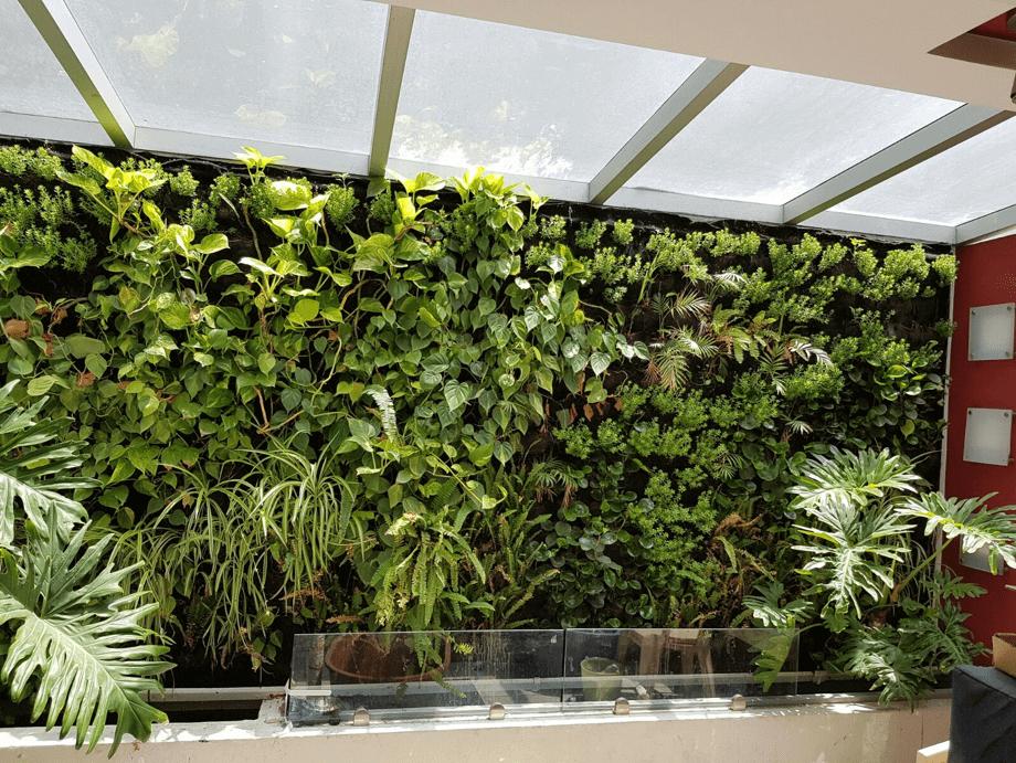 Muro Verde con garra de león
