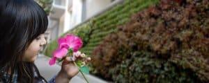 5 razones para tener un jardín vertical