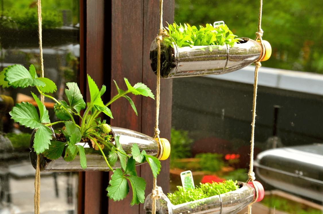 Muros Verdes de vidrio