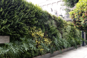 Muro Verde Goethe