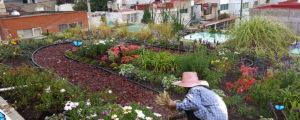 ¡Inspírate! Te enseñamos nuestros mejores jardines verticales