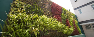 ¿Puedo restaurar mi muro verde?