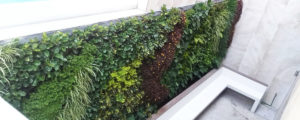 Cómo diseñar tu Muro Verde ó Jardín Vertical ideal
