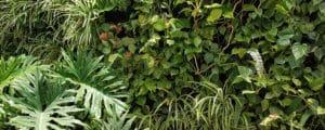 Todo lo que siempre quisiste saber sobre un Muro Verde