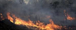 El Amazonas se incendia